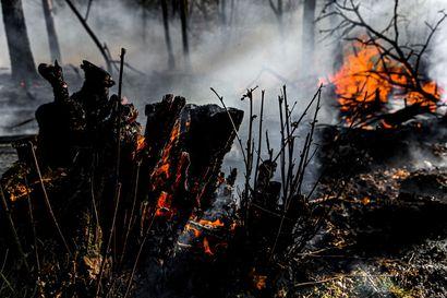 Brasilian armeija avuksi Amazonin sademetsään - korona ei hidasta ympäristörikollisia