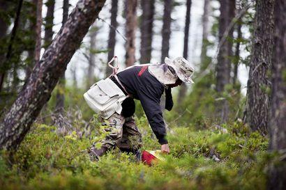 """Kotimaiset marjat voivat jäädä poimimatta jos thaipoimijat eivät pääse Suomeen – """"Emme tiedä ovatko he tulossa vai eivät, ja aika alkaa loppua"""""""