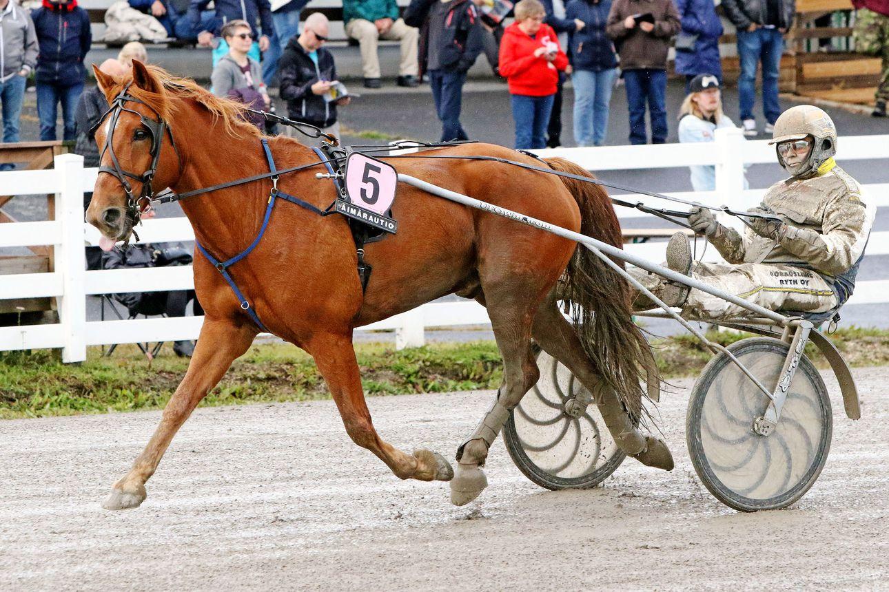 Rovaniemellä toinen perättäinen Arctic Horse Race
