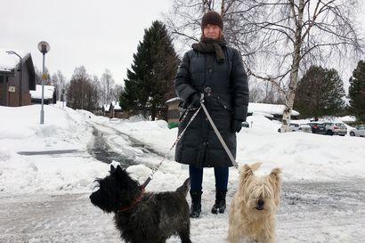 Ruotsin hoitajille maksetaan kriisitilassa lisää – Norrbottenin koronapotilaiden määrä ei laske, vaan paine kasvaa entisestään: liki 1100 uutta tartuntaa