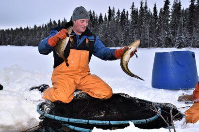 Ammattikalastaja kalastaa vapaallakin – Posion Kirintövaaran vapaa-ajan asunnollaan pikkulomiansa viettävä luotolainen ammattikalastaja ei pääse kalastamisesta eroon Posion mökilläänkään