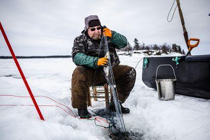 """Paljonko Inarijärveen sopii siikaa? Kalastajat vaativat miljoonaistutuksia, tutkija pelkää pahinta: """"Nähty on, ei kannata kokeilla enää"""""""