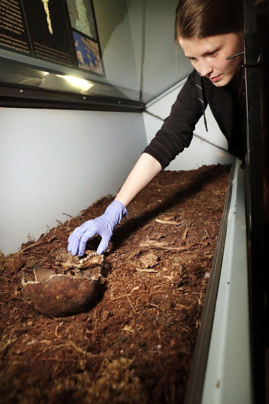 Humanististen tieteiden  kandidaatti Anniina Kuha  opiskelee arkeologiaa Oulun  yliopistossa. Hän purkaa  Kuusamon Lehtoniemestä  löydetyn shamaanin hautaa  museon vitriinistä.