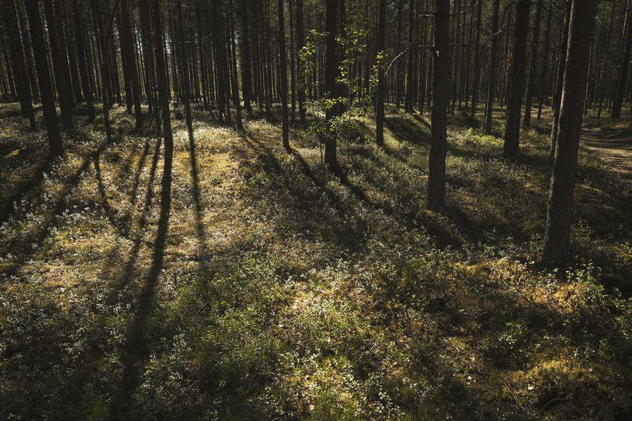 Jatkuvan kasvatuksen ideana on, että metsä säilytetään aina peitteisenä. Avohakkuita tehdään vain poikkeustapauksissa.