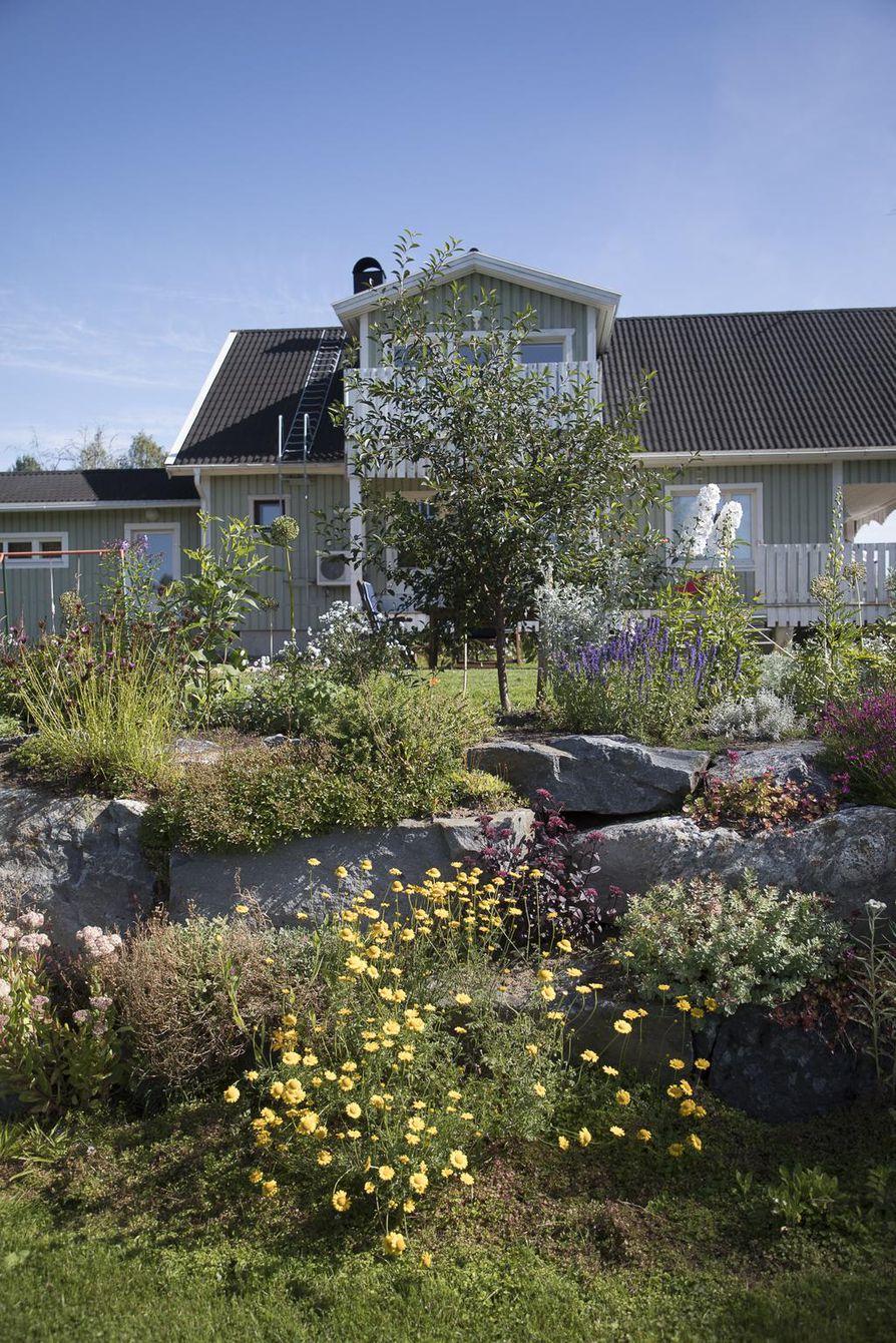Liisa Virta merkitsee puutarhavihkoonsa tarkkaan jokaisen istuttamansa kasvin päivämäärineen. Käytäntö on opettanut tuntemaan muita aggressiivisemmin levittäytyvät lajikkeet. – Yksi sellainen on hopeamaruna, joka kasvattelee aika paljon rönsyjä, Liisa Virta kertoo.