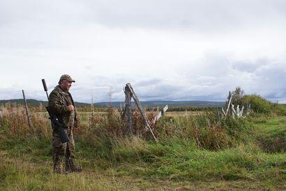 Karhu tappanut useita kymmeniä lampaita Sarakylässä viime viikkoina – lammaspaimenessa päivystetään kiväärin kanssa