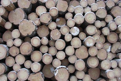 Miten metsiä pitäisi hoitaa? – EU-komission julkaisema metsästrategia ei kiellä avohakkuita, mutta jatkossa niille tarvitaan perustelut