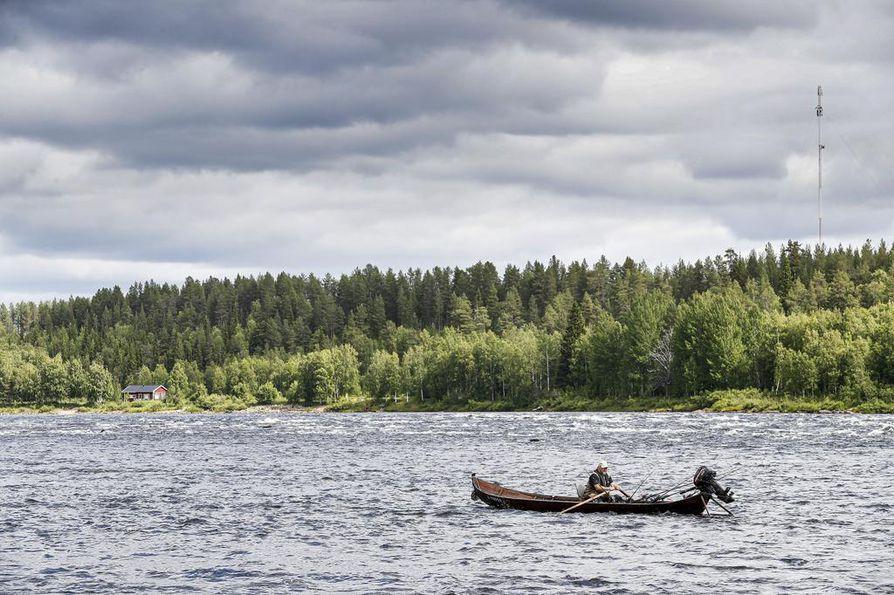 Tornionjoella on tänä kesänä nähty aiempia kesiä enemmän kuolleita ja henkitoreissaan kelluvia nousulohia. Kuvassa lohestetaan Tornionjoen Lappeankoskella.