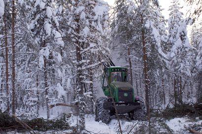 Ensiharvennusrästit metsäalan huolena– EU-hankkeella kerätään tietoa, kokeillaan ja valistetaan