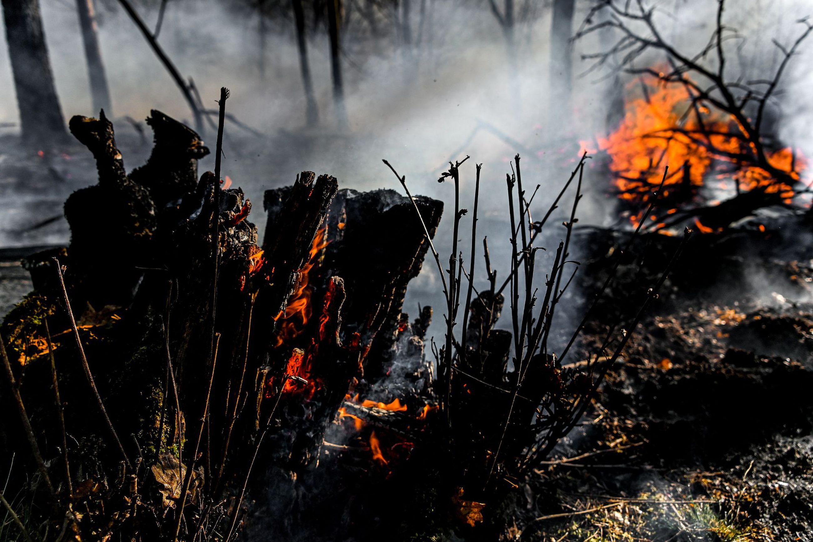 Amazonin Metsäpalot