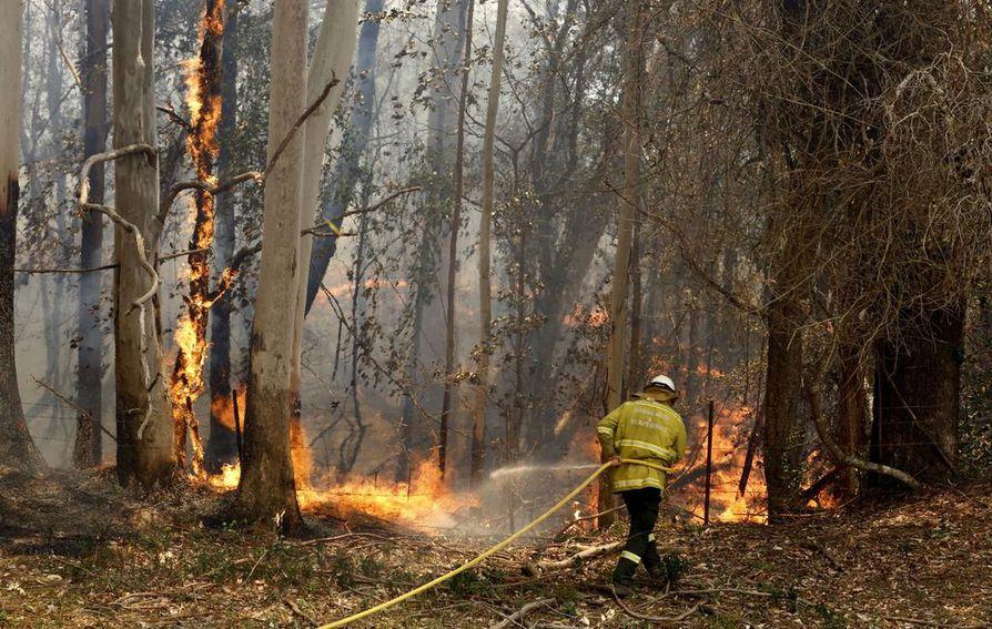 Palomies yritti estää palon etenemistä tiistaina Uuden Etelä-Walesin osavaltiossa Australiassa.