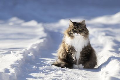 Lukijalta: Misu-kissan joulu