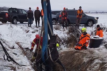 Karkuteille lähtenyt hevonen jäi ojaan jumiin Tyrnävällä – pelastuslaitos hälytettiin nostoavuksi