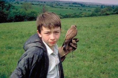 Päivän leffapoiminnat: Haukka lentää suoraan sydämeen – viiden tähden brittidraamassa eläydytään yksinäisen teinipojan maailmaan