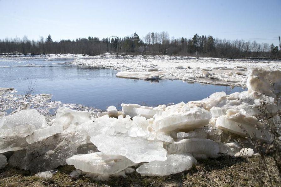 Jäät ovat lähdössä  Kiiminkijoessa, jonka tulvahuippu on tällä viikolla.
