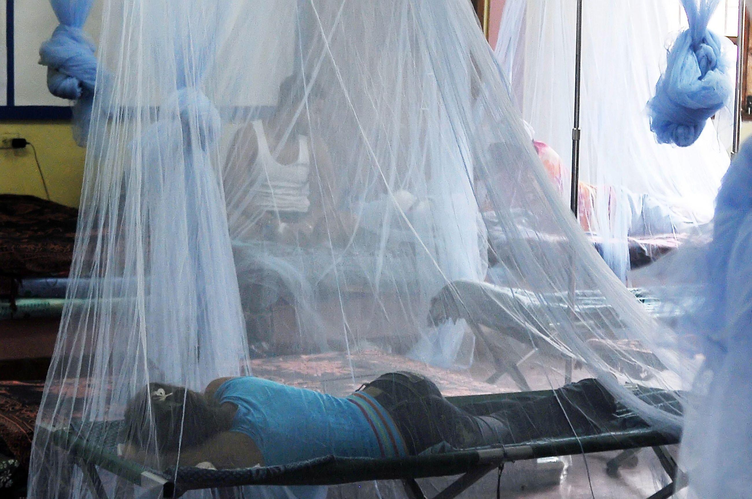 Denguekuume