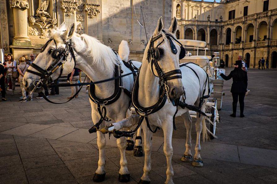 Häähevoset odottavat morsiusparia Duomon aukiolla. Duomo on vanhankaupungin lukuisista kirkoista tunnetuin.