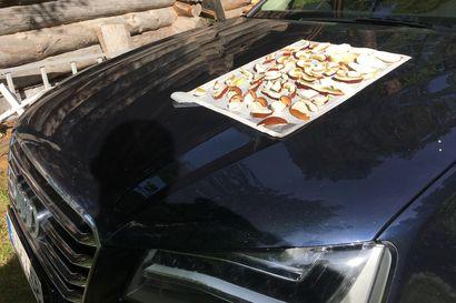 Lukijan vinkki: Konstit on monet herkkutattien kuivattamiseen – Manamansalon aurinko ja auton konepelti käyttöön