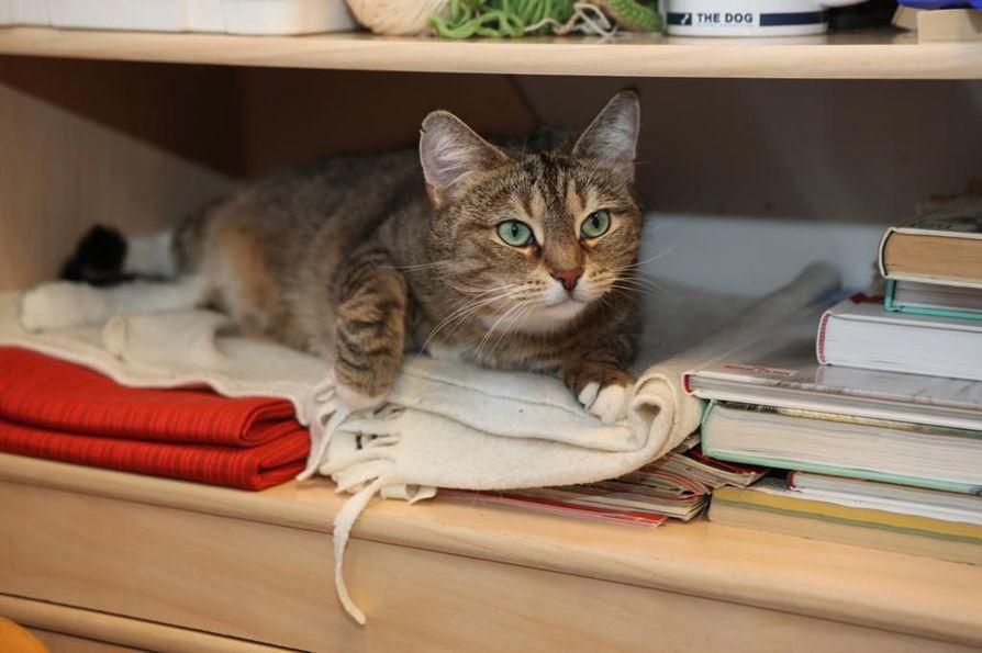 Eläinsuojelulain irrallaan tavatun lemmikin saa ottaa kiinni ja toimittaa löytöeläinkotiin tai kunnalliseen talteenottopaikkaan.
