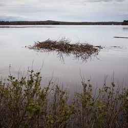 Tuorein tulvaennuste: Kittilän tulvan uskotaan olevan vuoden 2005 tasoa, Rovaniemelläkin vahinkoraja ylittyy reilusti