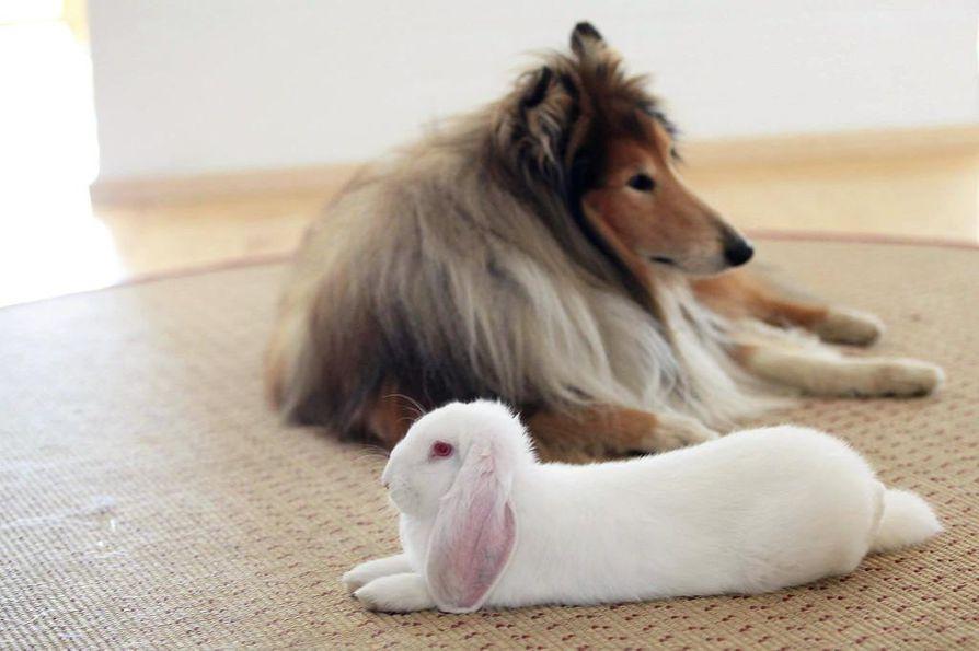 Eläinten viikolla pohditaan muun muassa, riittääkö häkki kanin kodiksi ja miksi koiran pitämistä häkissä paheksutaan, mutta sikaa voidaan pitää viikkokausia kääntymisen estävissä häkeissä.