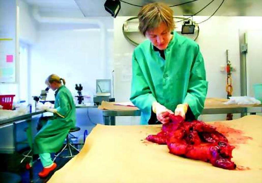 Keuhkot postista. Eelan Oulun yksikön riistaeläinlääkäri Marja Isomursu aloittaa hirven keuhkojen tutkimisen sormin, sitten otetaan veitsi. Biologian opiskelija Katja Udd etsii matoja ja loisia.