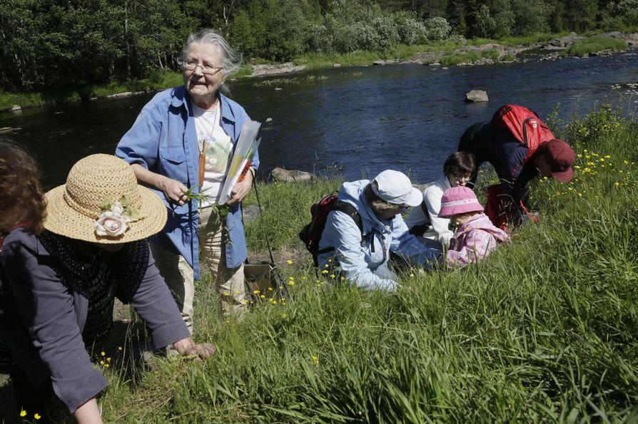 Koitelinkosken luonnonkukkaretkellä oppaana oli Esteri Ohenoja. Hän näytti kädestä pitäen, miltä mikäkin luonnonkukka näyttää.