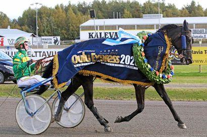 Upea An-Dorra ja sitkeä Maurizo Oulu Express -voittoihin - Lapin hevosilla hieno päivä Äimärautiolla