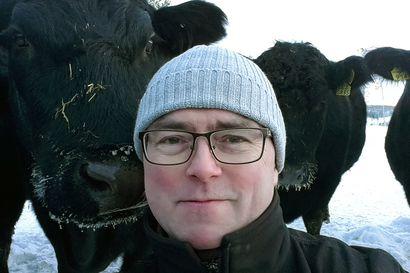 Rovaniemen vuoden maatilayritys kasvattaa Ounasjokivarressa lihakarjaa – Herkkupihveillä on kysyntää muun muassa Tanskan laaturavintoloissa