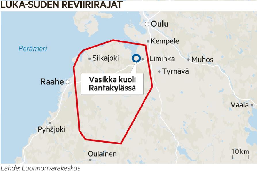 Luka-suden reviiri ulottuu laajalle alueelle.