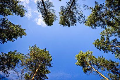 Eräopas neuvoo selvitymistaidot hätätilanteen varalle: Jos eksyt metsään, keskity pysymään voimissasi ja tee itsestäsi mahdollisimman näkyvä etsijöille