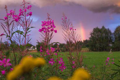 Matalapaine tuo Suomeen viikonlopuksi runsaita sateita ja ukkosia, ensi viikolla ilma viilenee