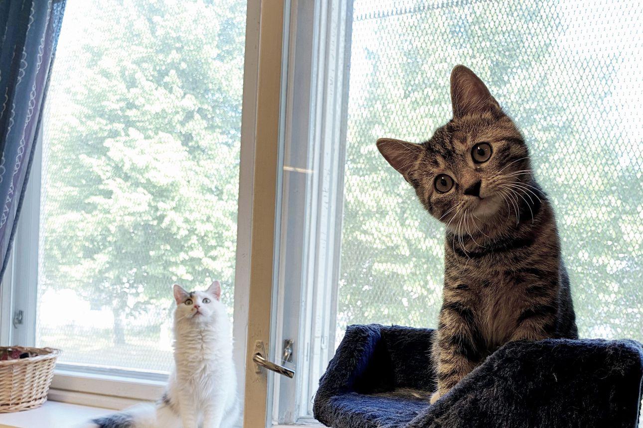 Hylättyjä kissoja löytyy eniten syksyllä Siikajokilaaksossa, ja valtakunnallisesti nyt on menossa kissakriisi