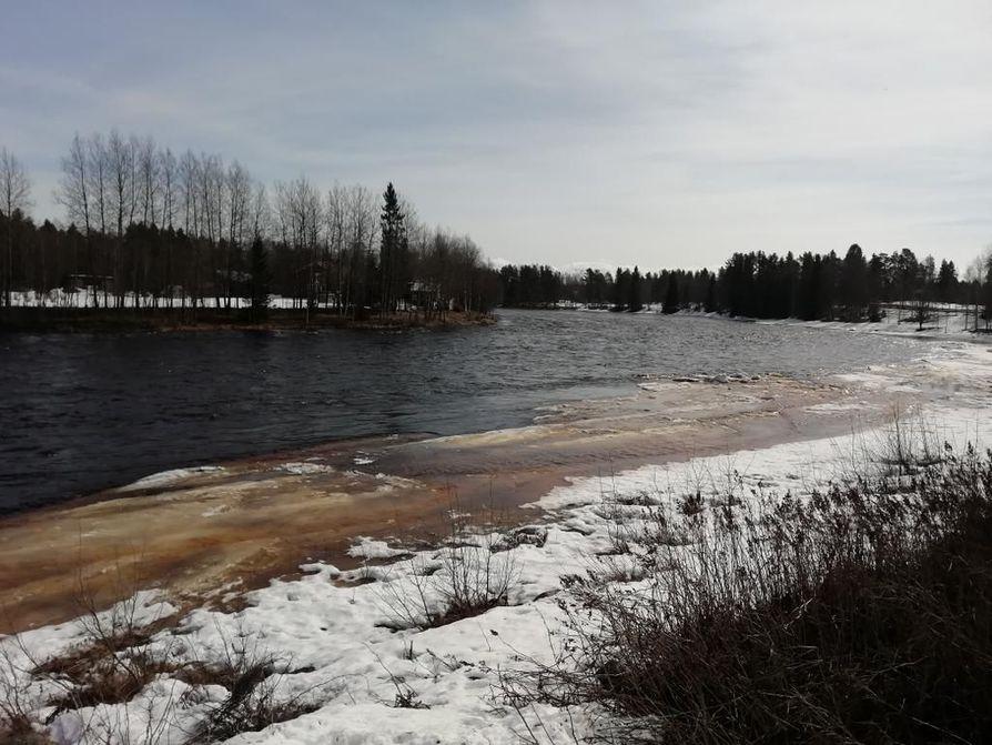 Lukijamme kuvasi Kiiminkijoen tulvatilannetta maanantaina 22.4. Jäät koskipaikoista menneet pitkiltä matkoilta, eikä jääpatoja juuri ole syntynyt, hän kuvailee.