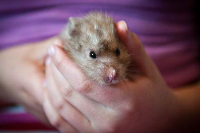 Kuusamon uuden eläinlääkärin avajaiset – Kahvitarjoilua ja suu makeaksi