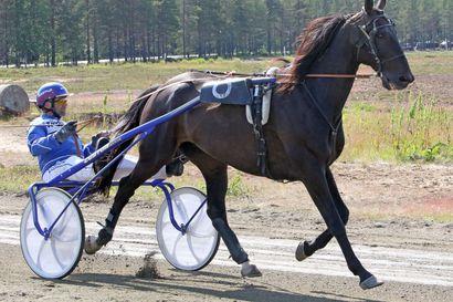 Martti Karjalainen ja Kemijärven hevoset pääosissa Kaukosessa