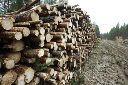 Metsänhoitoyhdistys: Puukauppa virkistynyt Pohjois-Suomessa – Koko vuosi jäämässä edellisvuodesta, mutta loppuvuodesta metsänomistajat ottavat loppukiriä