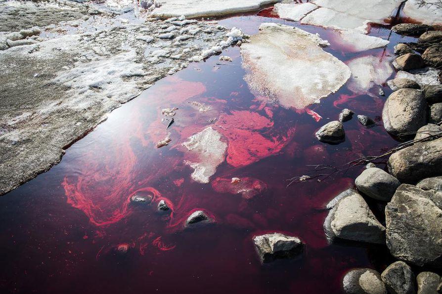 Öljyä on valunut jokeen viemäristä.