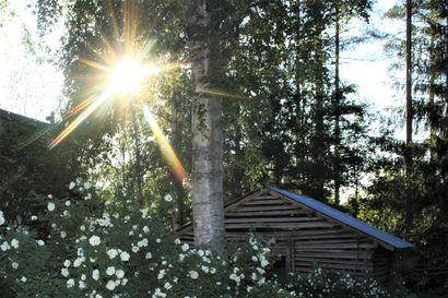 Kukkaloistoa, kokkoja ja kauniita maisemia – katso, miltä näyttää Kalevan lukijoiden juhannus