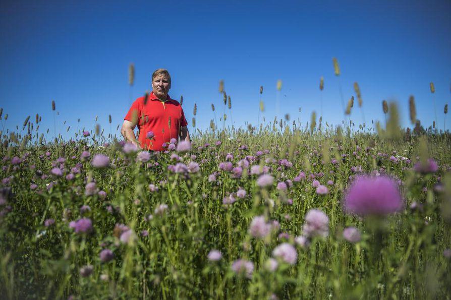 Kempeleläinen Tarmo Turunen päätti siirtyä luomuviljelyyn, koska luomusta jää tuottajalle enemmän rahaa käteen. Osa Turusten pelloista on siirtymävaiheessa, ja niissä tuotetaan naapurin lehmille rehua. Ensi vuonna näillä lohkoilla puidaan jo luomukauraa.