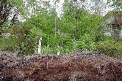 Myrsky näytti voimansa sunnuntaina – Muhoksella ja Kempeleessä tuuli repi puita ylös juurineen, Tyrnävän pelloilla nousi ilmaan hiekkamyrsky