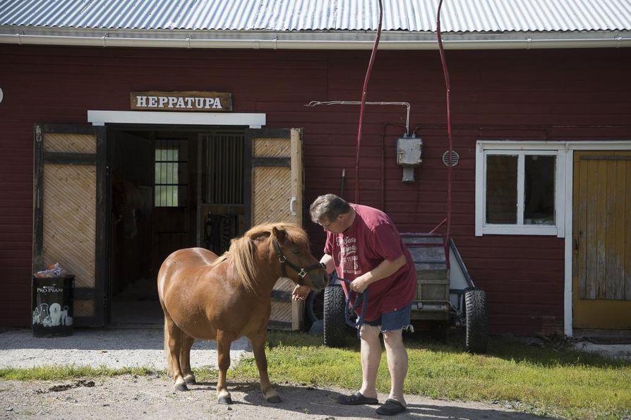Shetlanninponi Ponikujan Aapolle on oma reki ja valjaat tekeillä käsityönä. Hevoset ovat maadoittaneet myös Markku Kylmäsen Pelkosperälle.