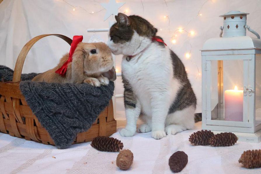 Hermanni-kani ja Tiuhti-kissa atoivat joulusuukon toisilleen.