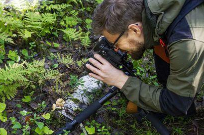 Joona Saraste kuvaa löytämänsä sienet ja ottaa näytteitä – talvella sieniharrastus jatkuu mikroskoopin kanssa