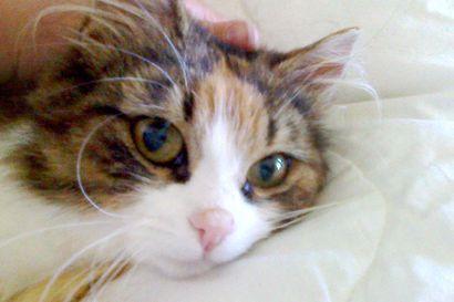 Ilta-ajelu ja löytämämme kissan kohtalo