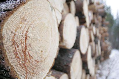 Puukauppa oli tammikuussa edellistalvea vilkkaampaa – Kysyntä painottuu tukkipuuvaltaisiin kohteisiin