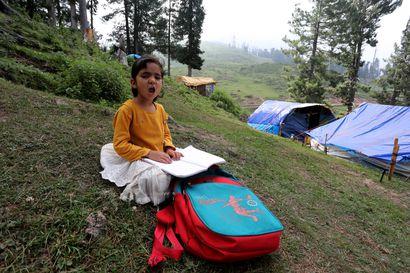 Kumar myi ainoan lehmänsä saadakseen älypuhelimen lapselle – internetyhteys on intialaislasten koulunkäynnin elinehto korona-aikana