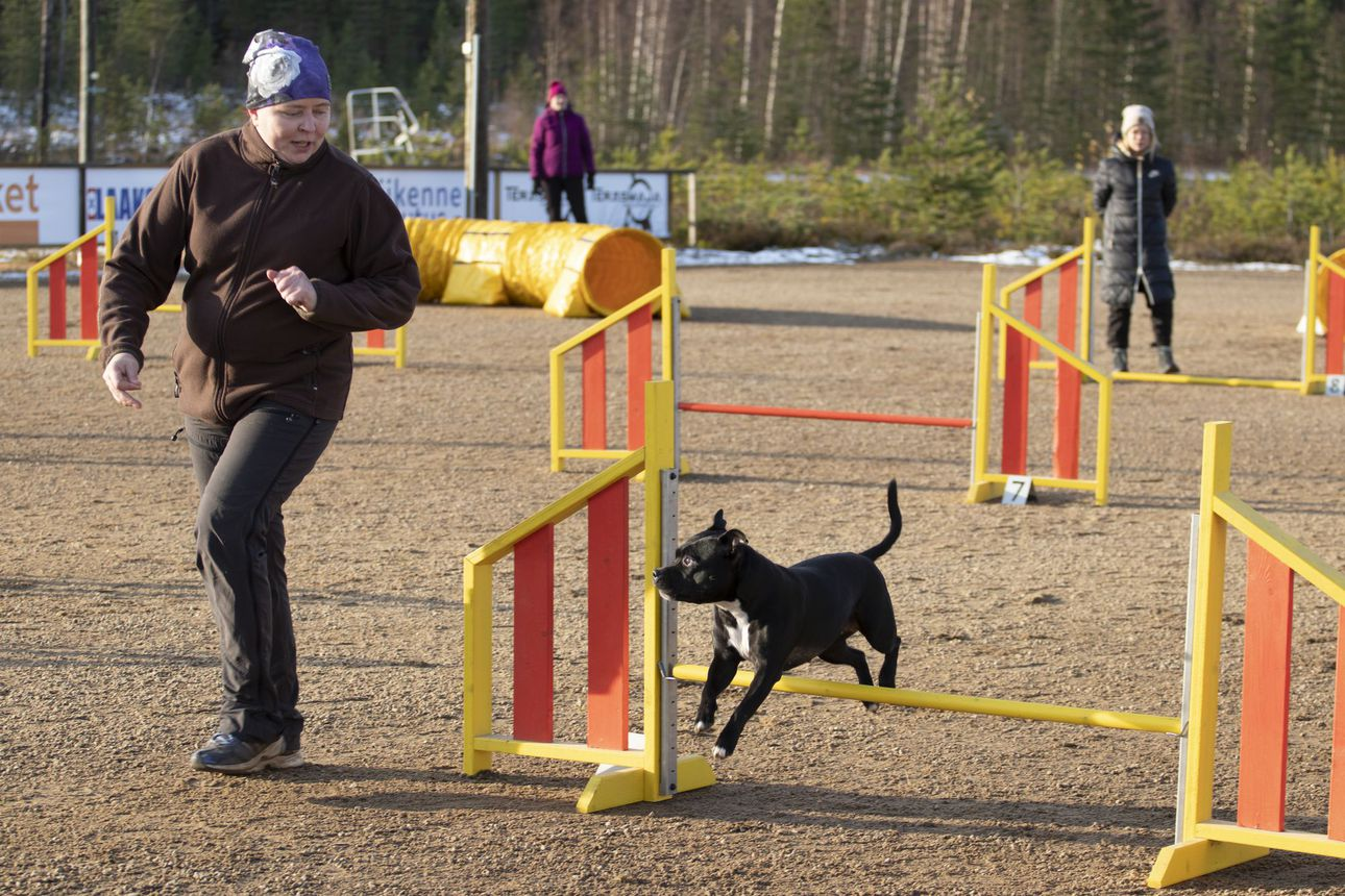 Agility-radan ja puitteiden remontti valmis –agilitya voi harrastaa myös kilpailematta koiran ja ohjaajan omaksi iloksi