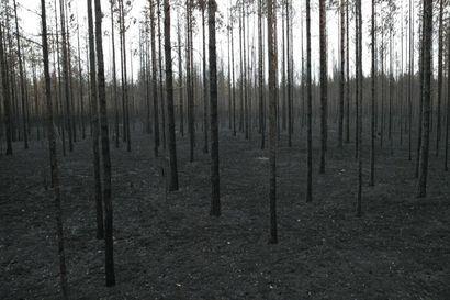 Muhoksen viime kesän massiivinen metsäpalo eteni syyteharkintaan – rikosnimikkeenä yleisvaaran tuottamus