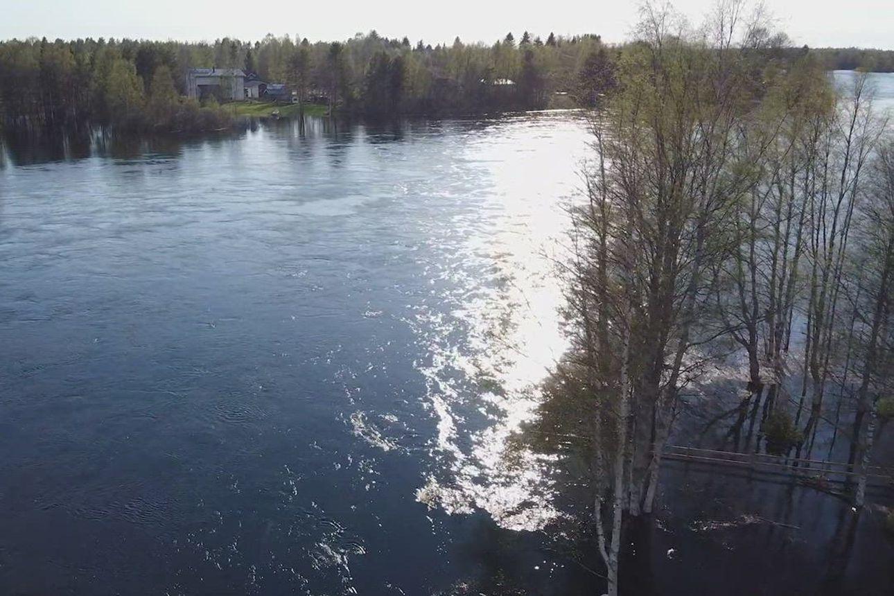 Koivikot veden vallassa - katso video Iijoen tulvasta valtatie 20 varrelta Pudasjärveltä